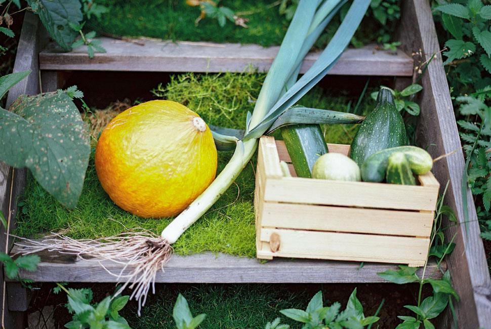 Gemüse-Eigenanbau - Bio Landpension Monika